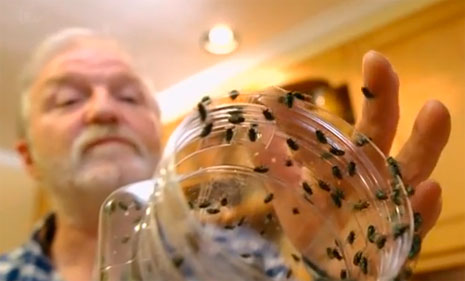 Hundreds of flies were released as part of the unique experiment.