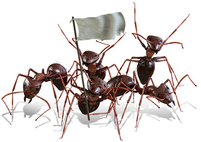 ant-pests-front